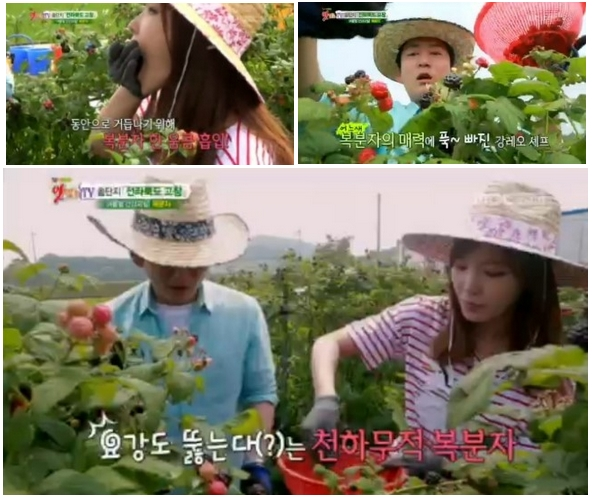 Black Raspberry Farm featured on MBC Korean TV