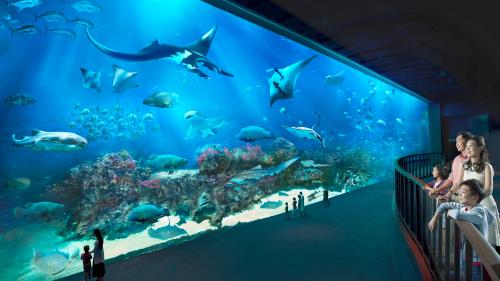 Buy S E A Aquarium Admission Ticket Best Price Guaranteed